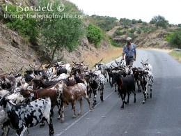 Goat herder, Portugal, 2014.