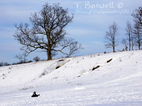 Snow tube sledding under the big tree.