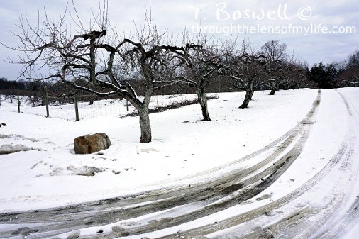 The road through Applewood Orchard and Winery, 2015. Warwick, NY.