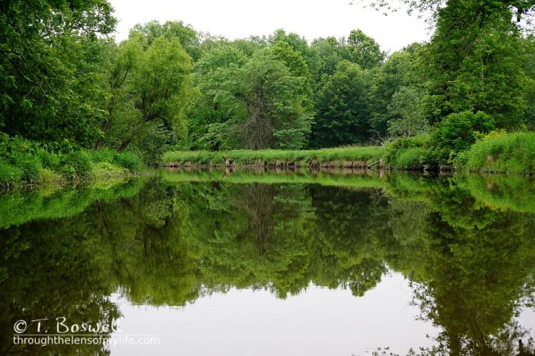 DSC01135-2-green-foliage-reflecting-wallkill-river-summer-2015-by-terry-boswell-bostree-sugar-loaf-nywm