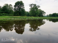 DSC01143-2cp-water reflections-walkill-river-summer-2015-terry-boswell-wm