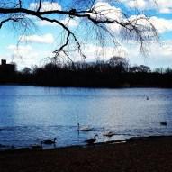 A run in Prospect Park