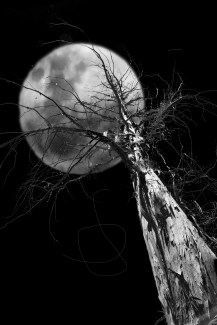 6 January - This was made from two photos - one of the moon, and the other of the tree and background. After much fiddling around (involving selecting the tree from the background and pasting it on the moon) I finally achieved the image I was aiming for.