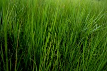 4 January - The grass in Dullstroom was quite long, providing me with the idea of a vibrant, abstract photo.