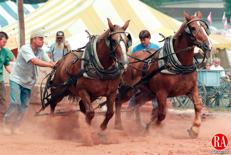 WOLCOTT,CT. 8/16/98--0816sv01.tif-- Todd Armbruster of Terryville drives his horses six feet with a load during the horse pulling event at the Wolcott Fair on Sunday. Steven Valenti for metro.