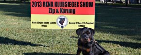My First Experience at an RKNA Dog Show