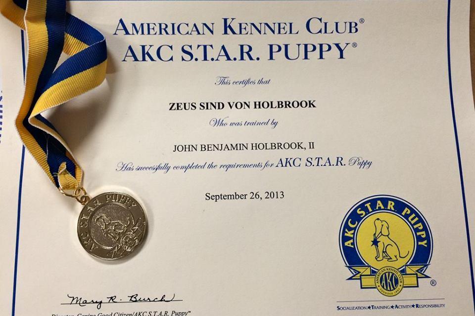 A Review Of The Dayton Dog Training Club Thrumylens