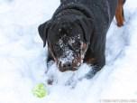 Winter 2015 Dog Photos