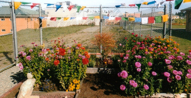 Prayer flags and a rose garden in the courtyard of a prison.