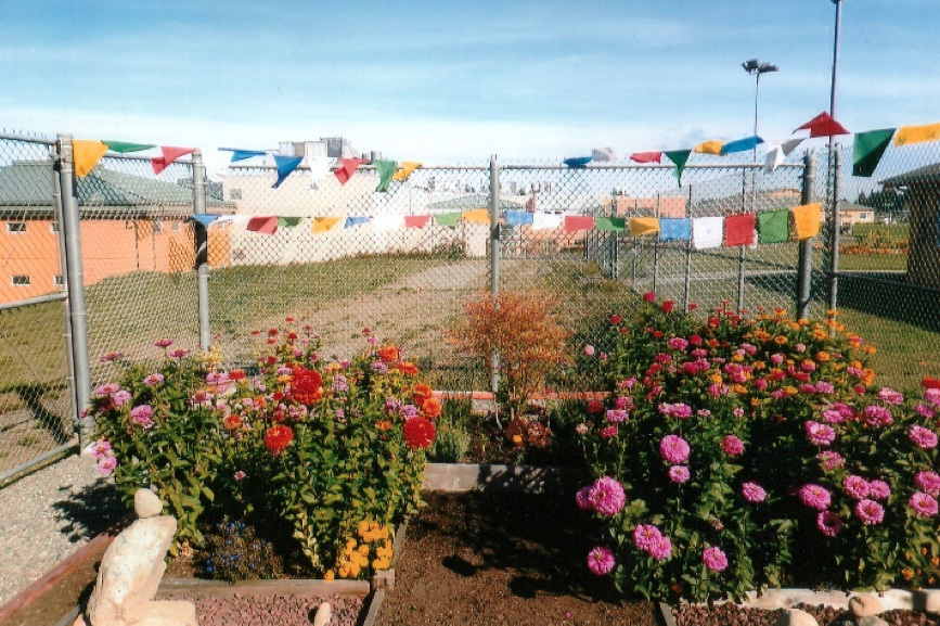 Prayer flags hung over a bed of rose bushes.