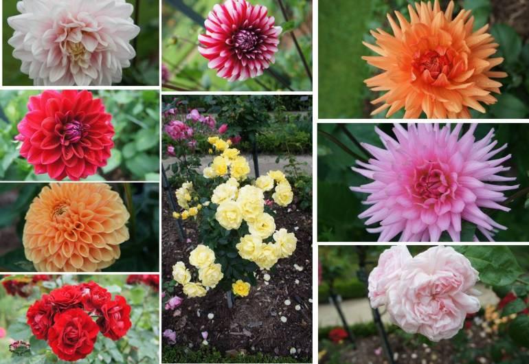 flowers-from-thabur-rennes