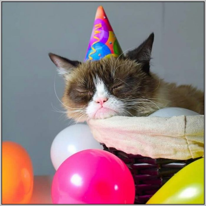 Cat And Hat Birthday Party