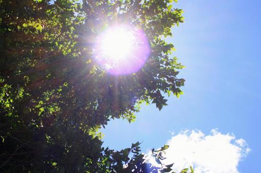 ジリジリ暑いの写真素材|写真素材なら「写真AC」無料(フリー)ダウンロードOK