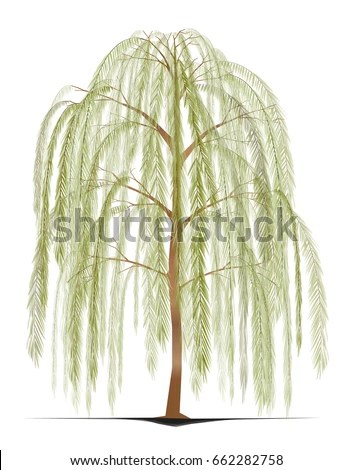 Willow Branch Stock Images Royalty Free Images Amp Vectors