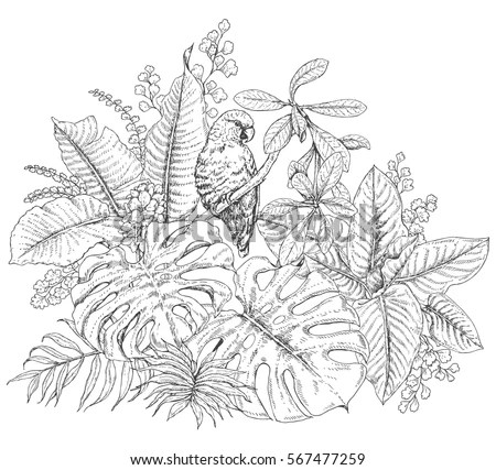 Hand Drawn Branches Leaves Tropical Plants Stock Vector