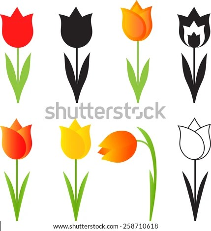 Tulip Stock Photos Royalty Free Images Amp Vectors
