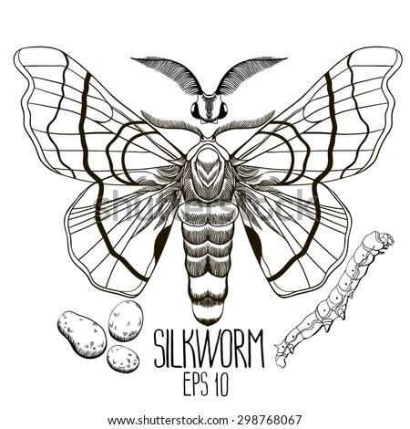 silkworm stock photos royalty free images amp vectors shutterstock