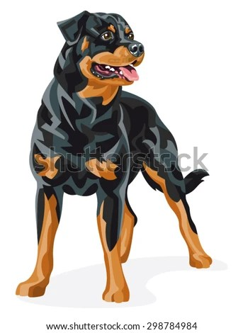 Rottweiler Stock Images Royalty Free Images Amp Vectors