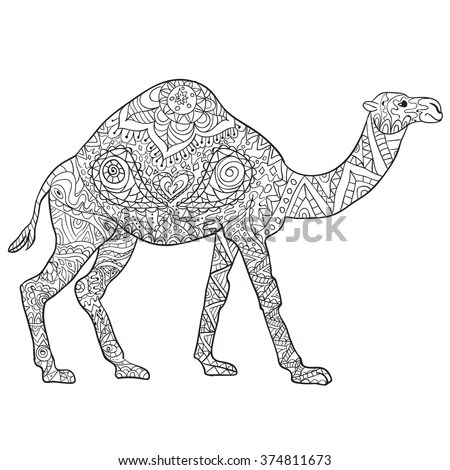 camel isolated stock photos royalty free images amp vectors