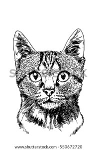 Graphical Portrait Cat Vector Illustration Tattoo Stock Vector     Graphical portrait of cat  Vector illustration for tattoo  printing and  coloring