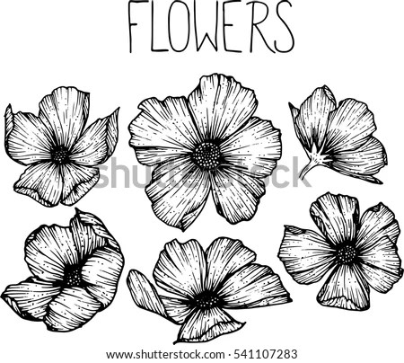 Flowers Drawing Vector Illustration Clipart Stock Vector 541107283     flowers drawing vector illustration and clip art