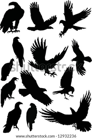 Eagle Silhouettes Stock Images Royalty Free Images