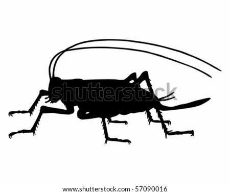 https://i2.wp.com/thumb10.shutterstock.com/display_pic_with_logo/131800/131800,1279045310,3/stock-vector-cricket-silhouette-57090016.jpg