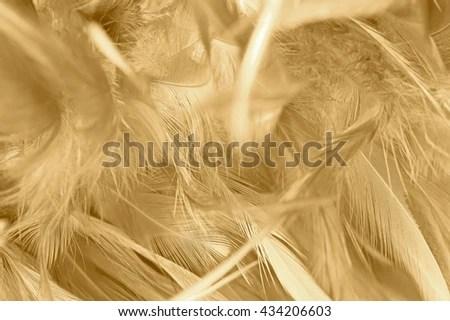 texture background pattern fur white yak stock photo shutterstock