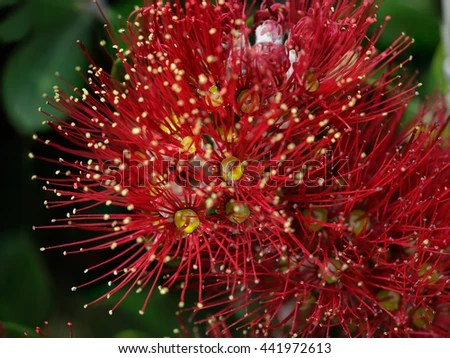 Beautiful Firework Red Heart Explosion Passion Stock Photo