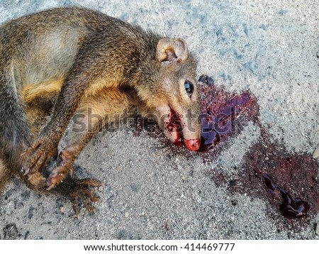 https://i2.wp.com/thumb101.shutterstock.com/display_pic_with_logo/4024045/414469777/stock-photo-squirrel-dead-lay-on-road-by-car-accident-male-squirrel-s-tail-bunch-414469777.jpg