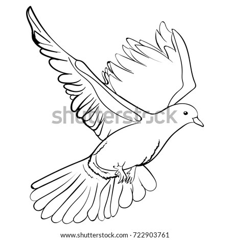 Hand Drawing Pigeon White Stock Images Royalty Free
