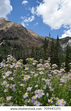 Flowers Mountain Forest Stock Photo  Royalty Free  709445191     Flowers  Mountain  Forest