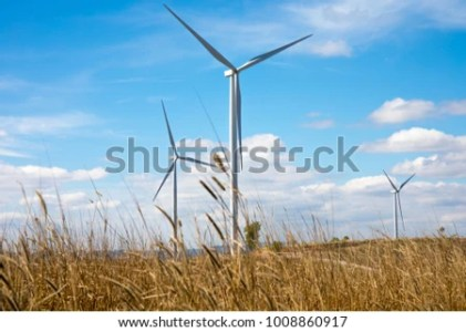 Grass Flower Electric Wind Turbine On Stock Photo  Royalty Free     Grass flower with Electric wind turbine on the background and blue sky and  clouds