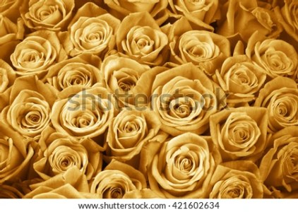 Bunch Gold Colored Rose Flowers Closeup Stock Photo  Royalty Free     Bunch of gold colored rose flowers close up as background  Filtered image
