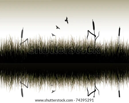 swamp with reed and with birds over stock vector