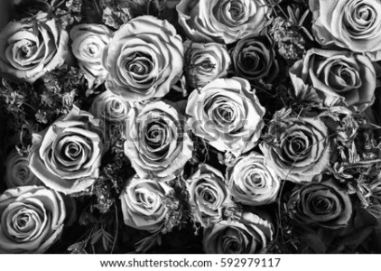 Black White Background Flowers Roses Stock Photo  Royalty Free     Black and white background of flowers roses