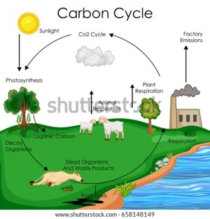 Photosynthesis Diagram Stock Images, RoyaltyFree Images