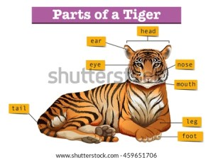 Tiger Legs Stock Images, RoyaltyFree Images & Vectors