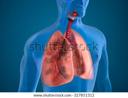 Respiratory Tract Stock Images Royalty Free Images