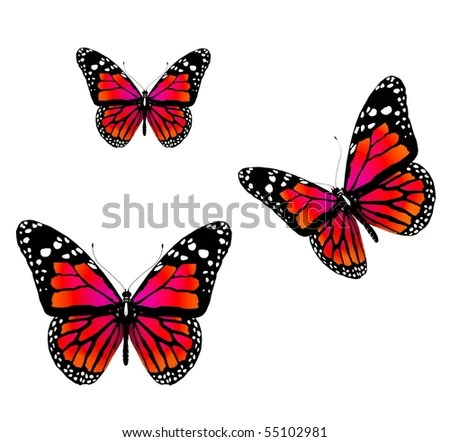 red butterflies quot stock photos royalty free images amp vectors