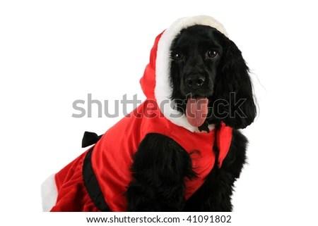 Valentines Day Postcard Beautiful Black Puppy Stock Photo 592029611 Shutterstock