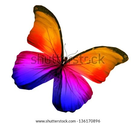 colourful butterfly stock photos royalty free images amp vectors