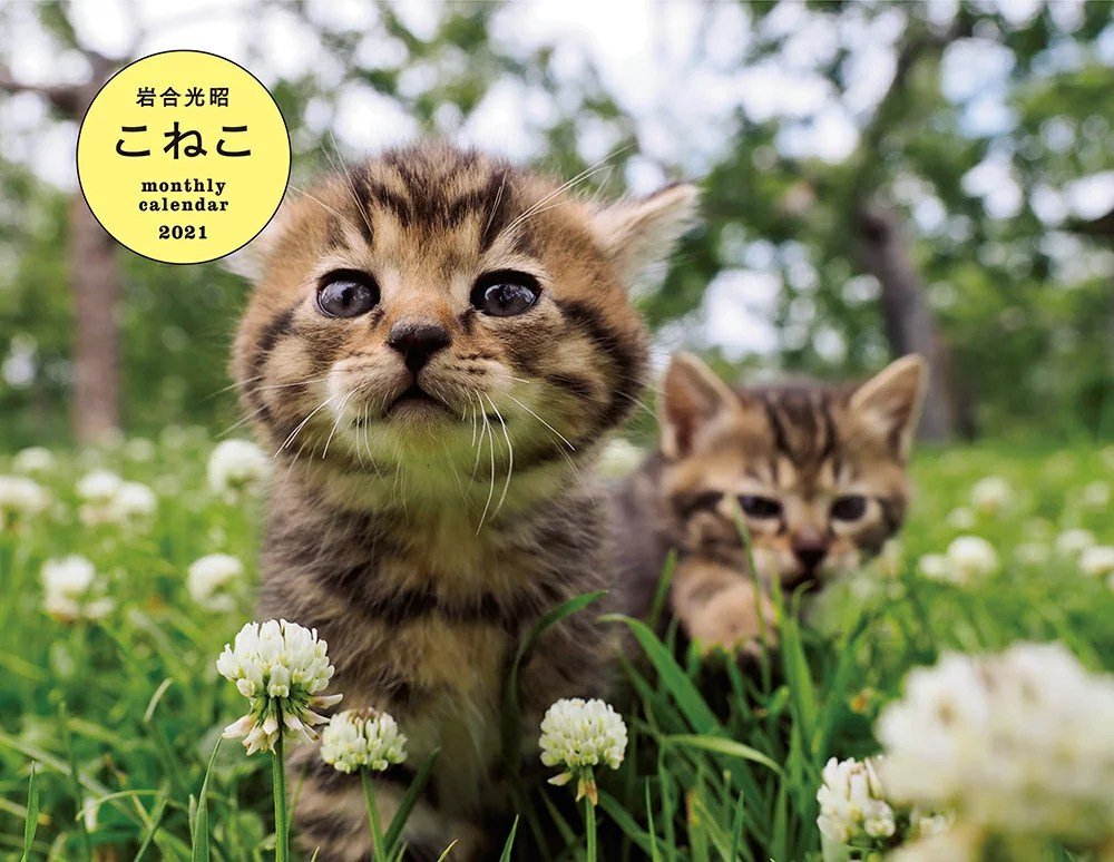 岩合光昭 こねこ monthly calendar 2021
