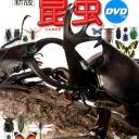 小学館の図鑑NEO〔新版〕 昆虫 DVDつき [ 小池 啓一 ]