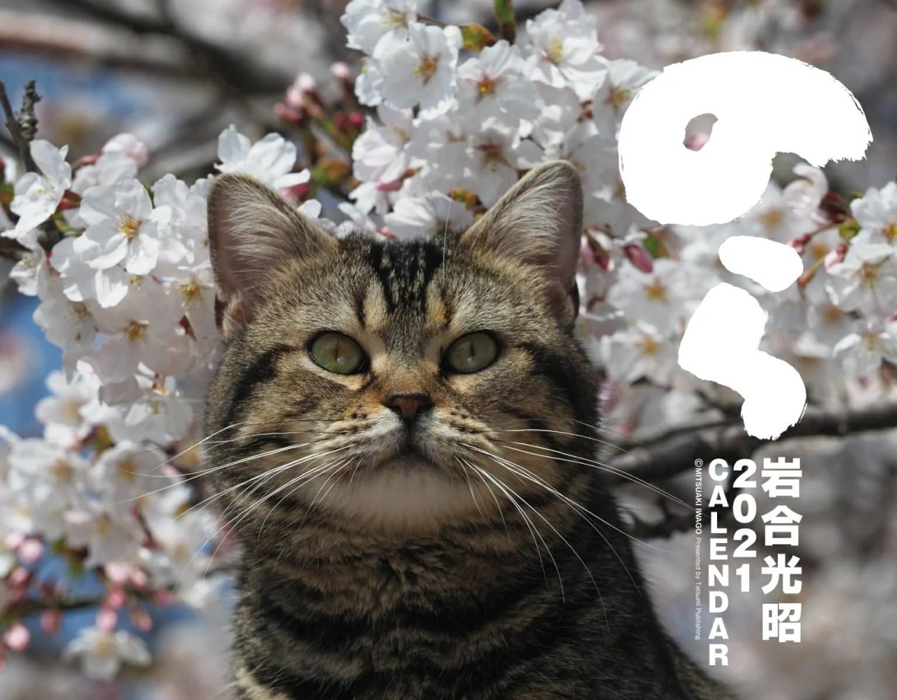 岩合光昭2021カレンダー のら [ 岩合光昭 ]