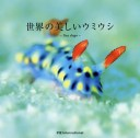 【店内全品5倍】世界の美しいウミウシ
