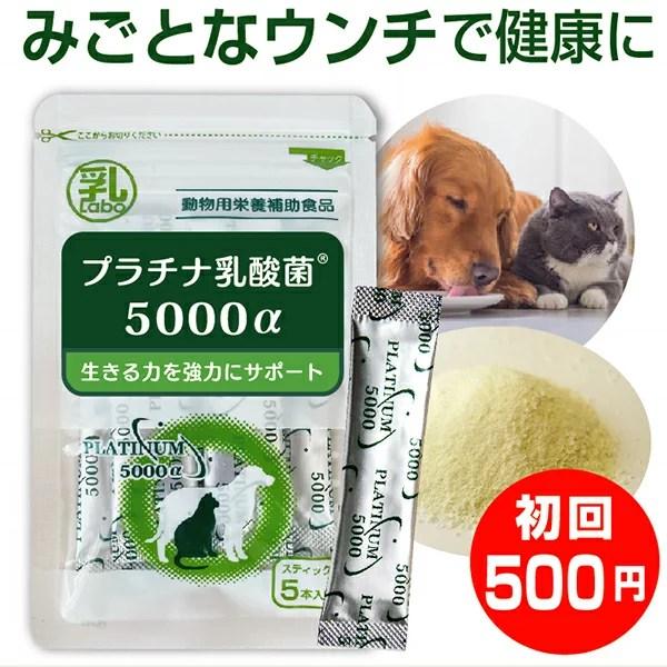 乳酸菌 ペット 犬 猫 サプリ プラチナ乳酸菌5000α(初回お試し500円 ご家族様2コまで)2コ