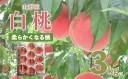 【ふるさと納税】FS20-062 【令和3年産先行予約】山形