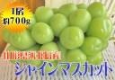 【ふるさと納税】山形県河北町産シャインマスカット約700g(