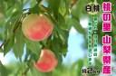 【ふるさと納税】2022年発送 山梨県産 完熟桃 白桃系 約